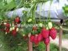 Nhà lưới nông nghiệp - mangnhakinh.vn