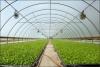 Video hướng dẫn thi công mô hình nhà kính kết hợp nhà lưới trồng hoa địa lan