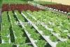 Công nghệ quản lý nhà kính trồng rau hoa