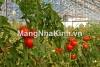 Xây dựng thi công nhà lưới nông nghiệp công nghệ cao - mangnhakinh.vn