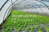 Mô hình nhà kính nông nghiệp trồng rau hoa công nghệ cao