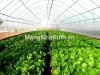 Lưu ý khi thiết kế xây dựng nhà kính nông nghiệp trồng rau hoa