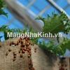 Nhận dạng và kiểm soát côn trùng trong nhà kính (P4)