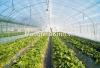 Nhà kính công nghệ cao trồng rau hoa