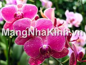 Trồng hoa trong nhà kính, nhà kính trồng hoa, trong hoa trong nha kinh, nha kinh trong hoa