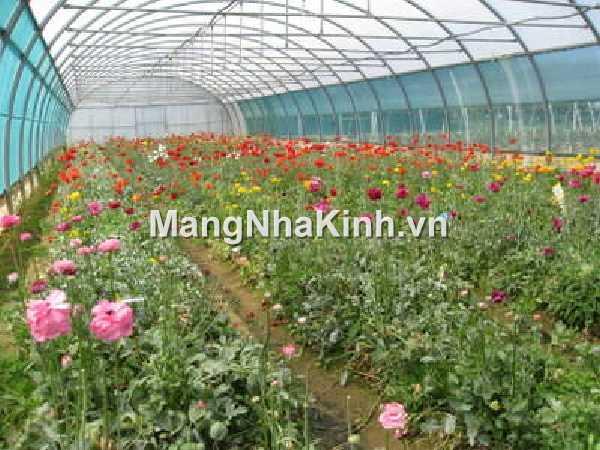 Nhà kính trồng rau hoa và những vấn đề về kỹ thuật canh tác