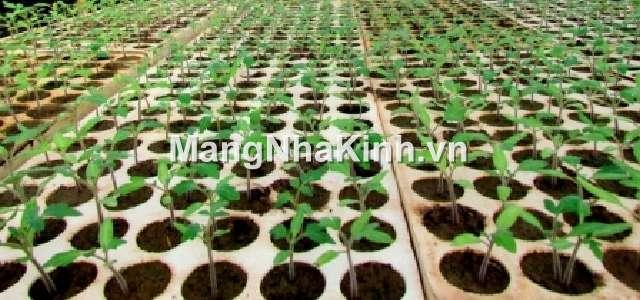Vỉ xốp lỗ ươm cây (khay xốp lỗ trồng cây)